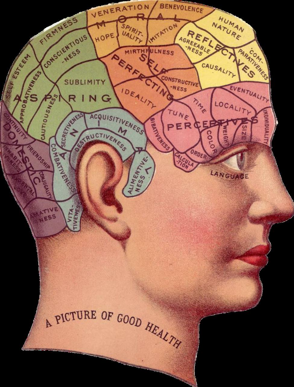 On entend encore souvent des gens qui se décrètent « logiques » et se résigner sur leur manque de compétences artistiques ou d'intuition, dire : « Ça ne m'étonne pas, je suis cerveau gauche ! ». À l'inverse, d'autres justifient leurs facilités à imaginer, créer, rêver — et plaisantent inversement sur leurs difficultés avec les choses d'ordre plus matériel — en disant : « Normal, c'est mon côté très cerveau droit ! ».