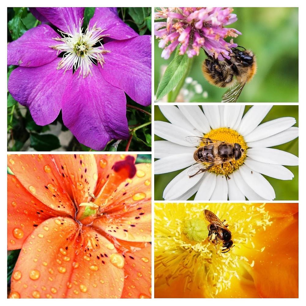 Fleurs et butineurs
