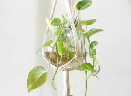 Hanger de macramê: solução para ter plantas em espaços pequenos