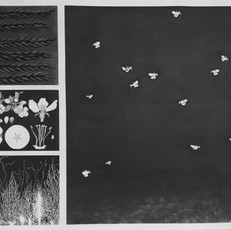 Interrupted Ecosystem: Pollinators and Prairies