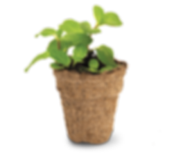 Mint seed kit.png