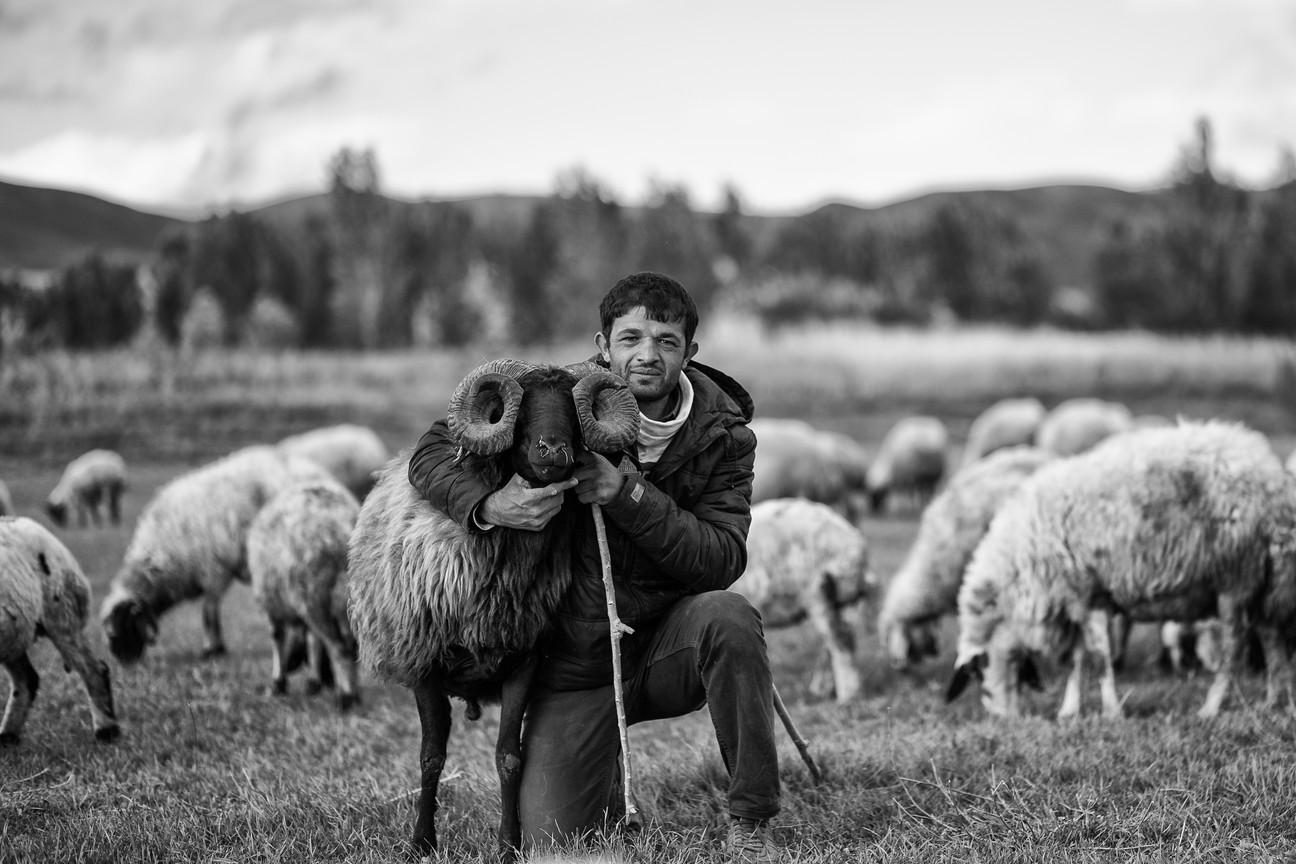The shepherd II