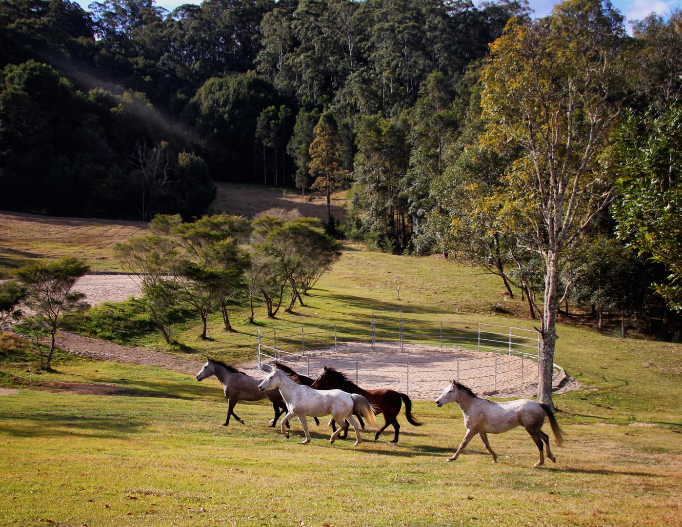 horses in action.jpg