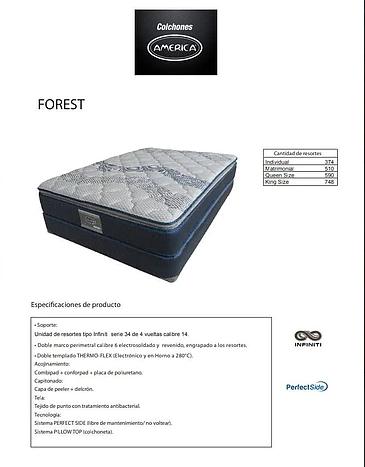 Colchon Forest