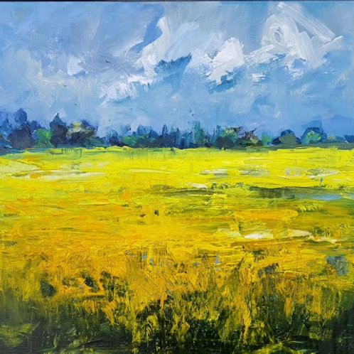Yellow polder fields