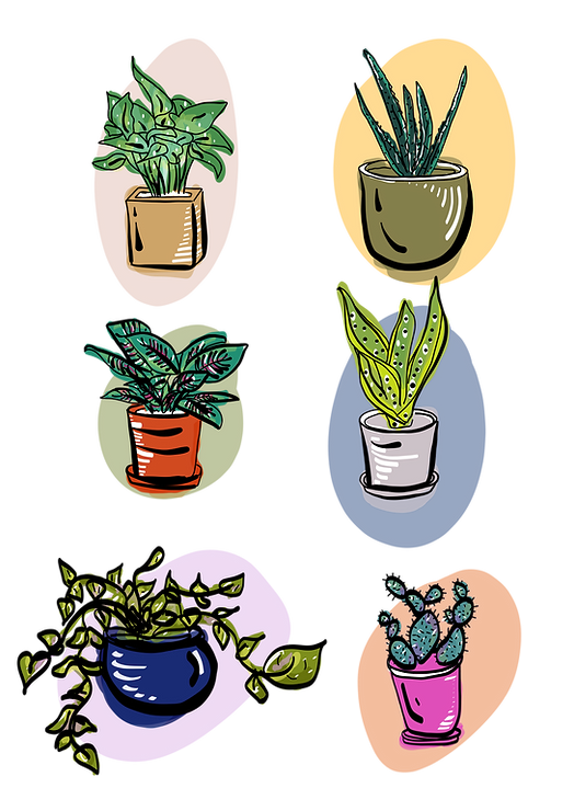 Plant babes.png