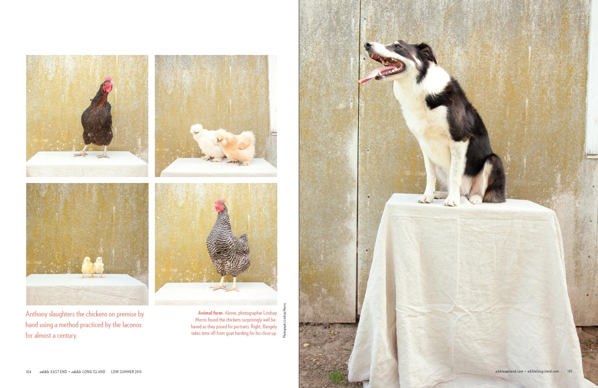 Iacono Farms (p.3 of 4)
