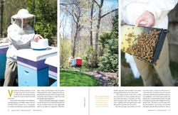 Bee Smart Designs (p.2 of 4)