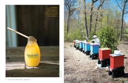 Bee Smart Designs (p.3 of 4)
