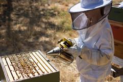 1 tending bee hives.jpg