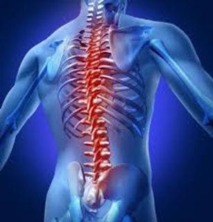 le système postural