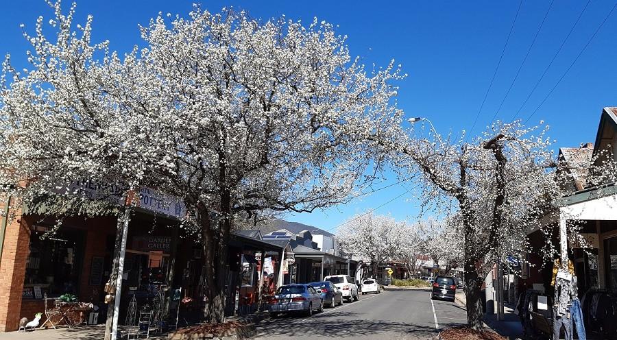 Spring in Bright