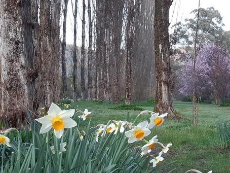 Celebrating Spring in Bright