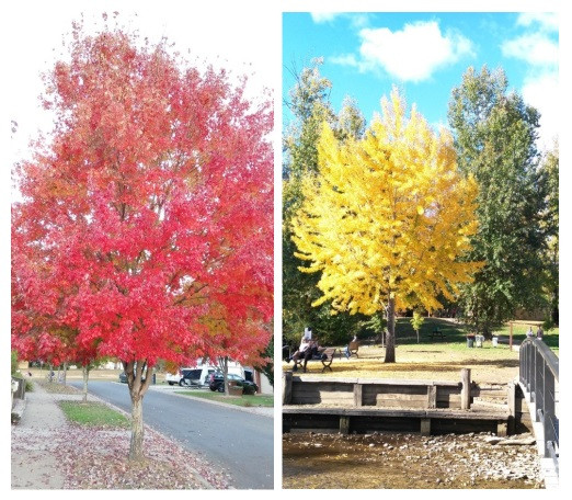 The changing seasons of Bright