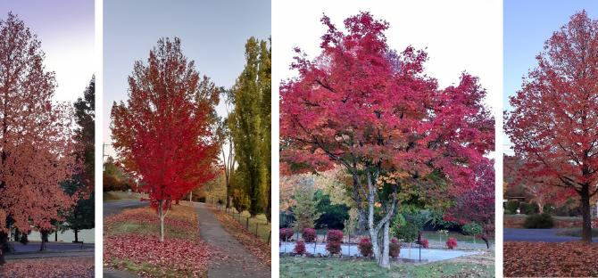 A Bright Autumn