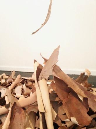 bark pile on floor.jpg