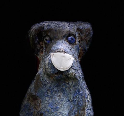 """blue dog or blue dog"""