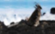 Land Art Projekt Dark Ark Stromboli.png