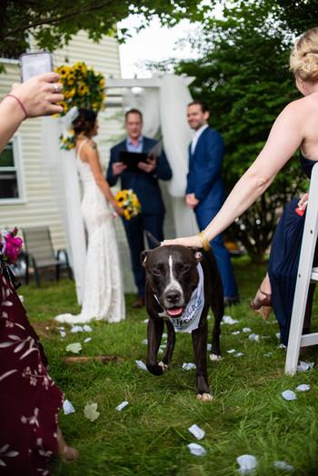 backyard wedding PA philly dog aisle