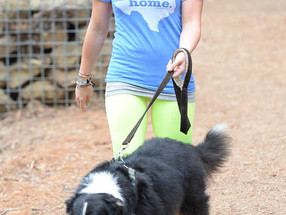 El tributo de despedida que Hilary Duff le rindió a su perro te partirá el corazón