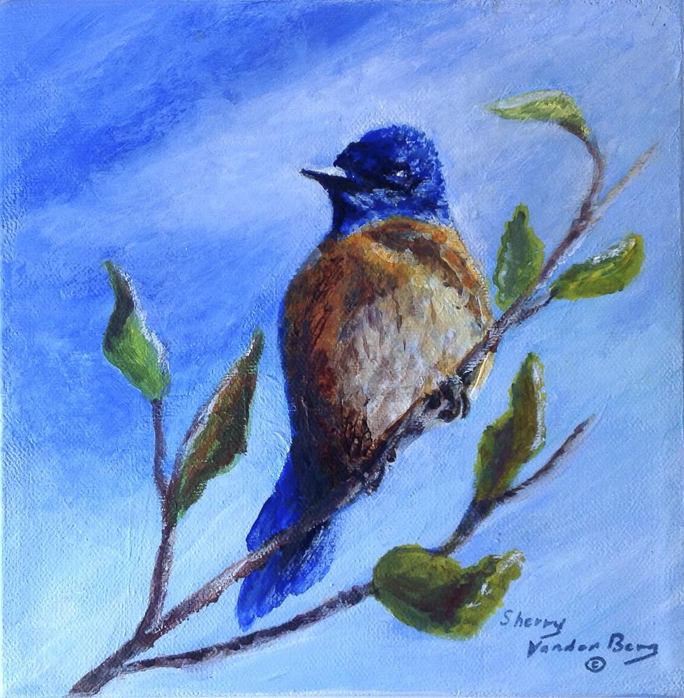 Title: Western Blue Bird