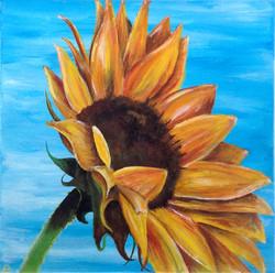 Title: Sunflower