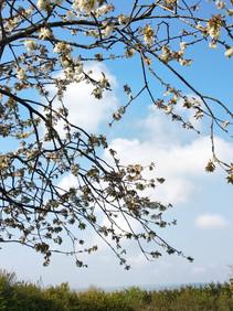 Les énergies du mois de mai Médiumnité et Accompagnement-Myriam Aggad