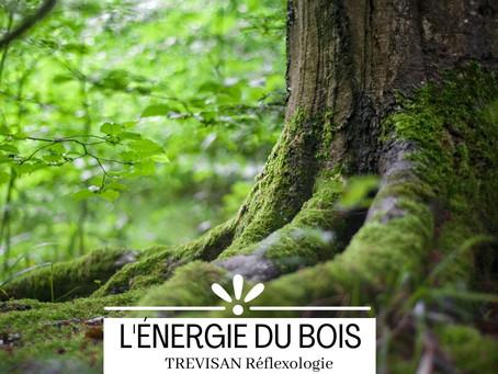 L'énergie du bois : le printemps