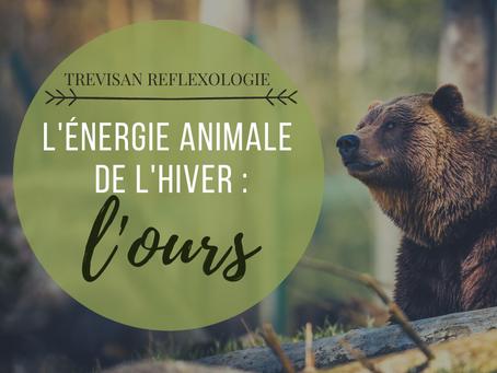 L'énergie animale de l'hiver : l'Ours