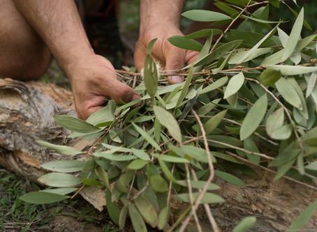 De la matière végétale au savoir aromatique!