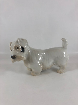 2011 Sealyham Terrier B&G