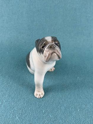 Nr: 3265 - Sjælden Hund Bulldog Royal Copenhagen