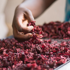Niakk Jarinu, Thiès. Des jeunes femmes sont formées sur la transformation des fruits et légumes, et des produits céréaliers. Ici, elles apprennent à faire le jus de bissap en grande quantité.