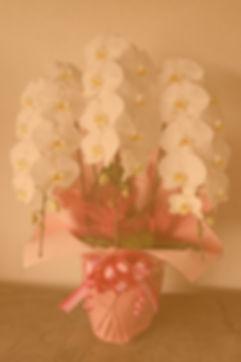 DSC02596_O_f.jpg