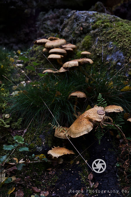 Mushroom Trail.jpg