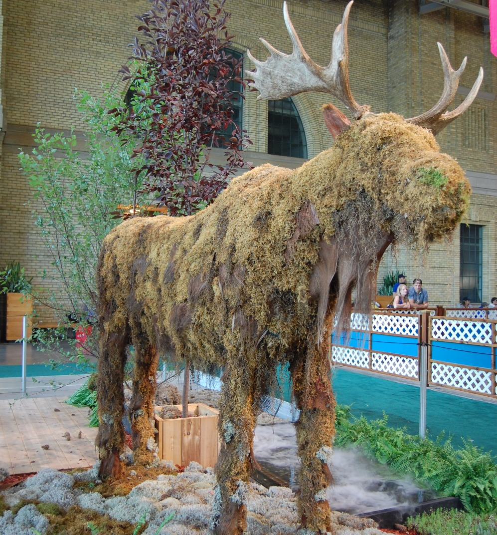 36.Life size Moose custom