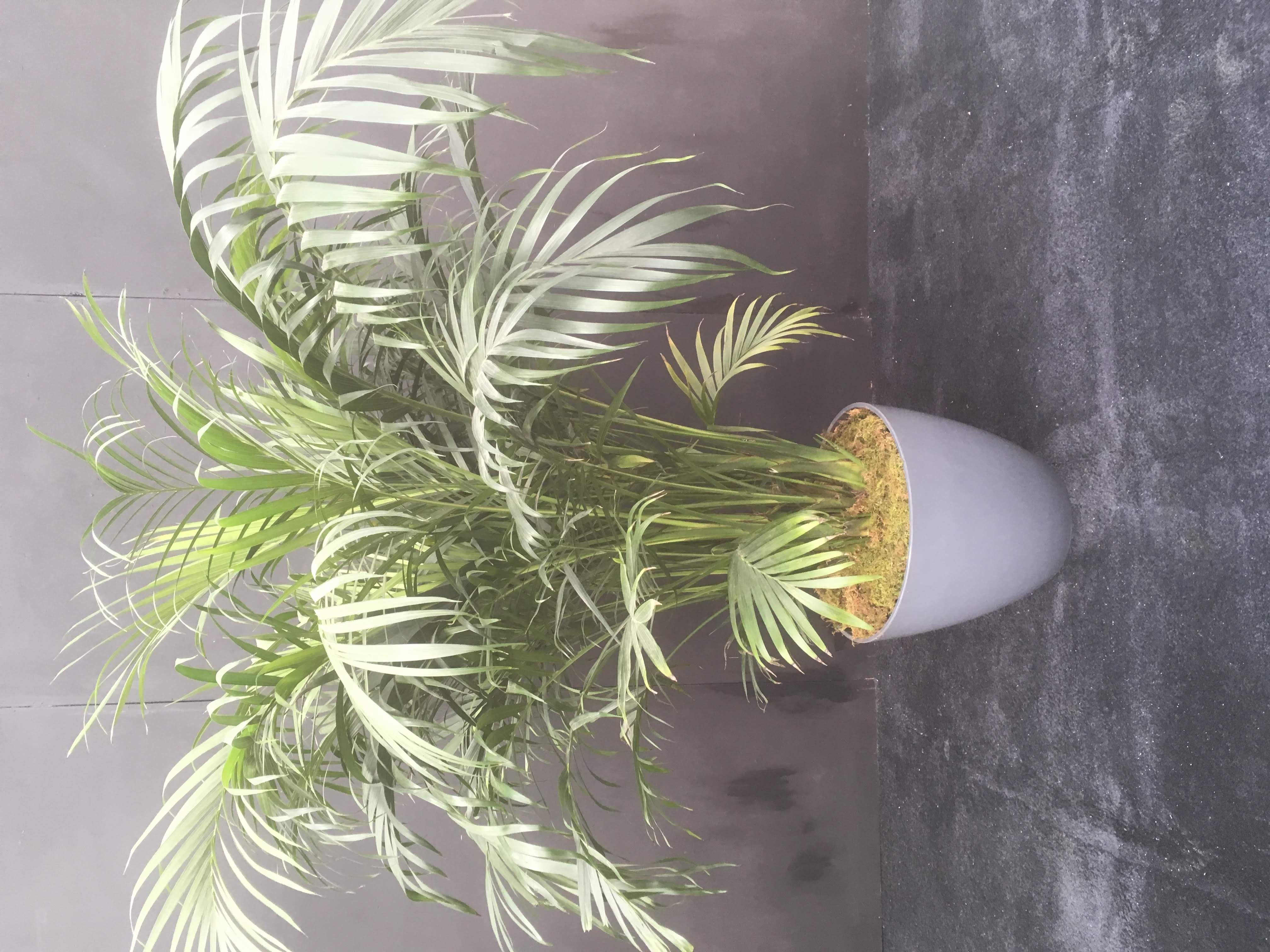 Palm tree in a Vase