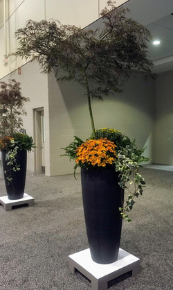 Planter with Tree