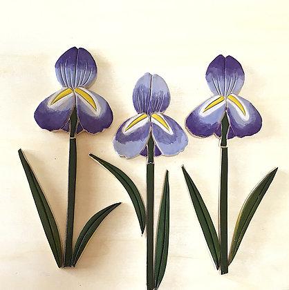 אירוסים- סט  של שלושה פרחים