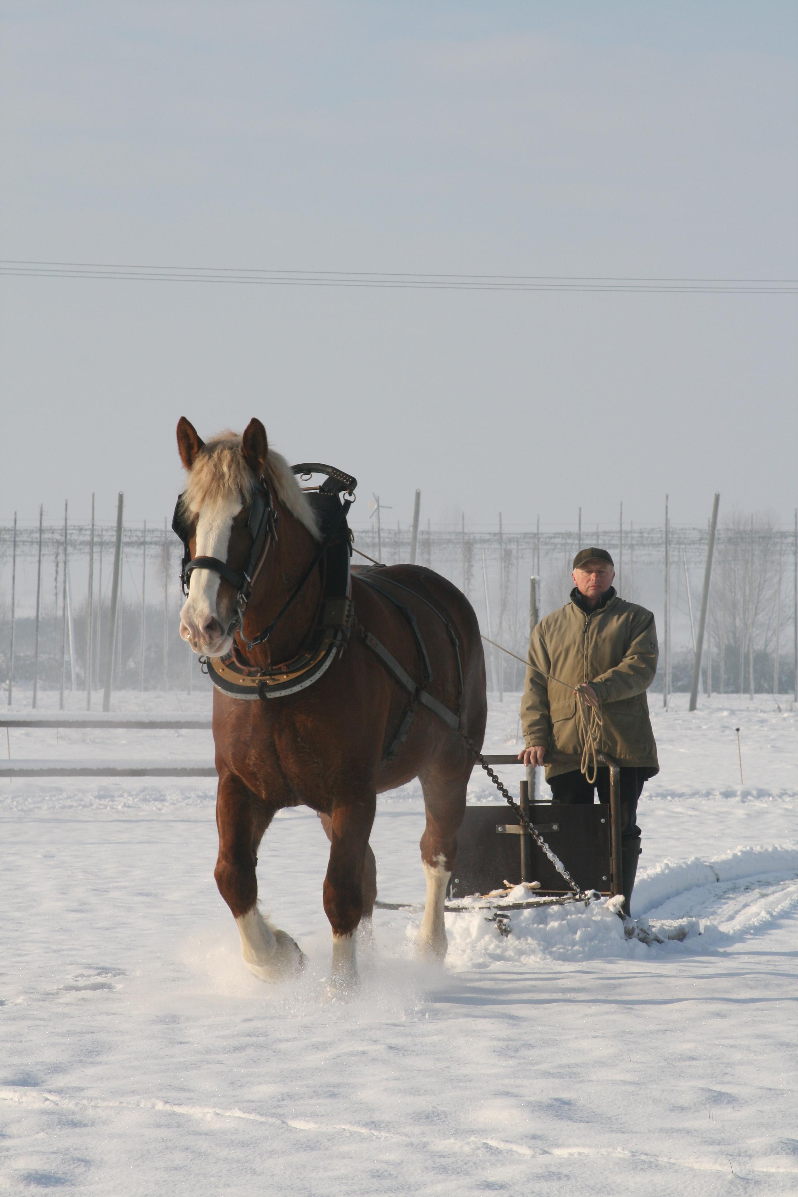 Un bel hiver