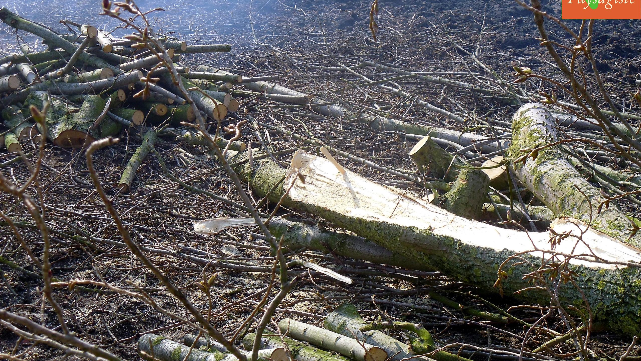 Du bois pour cet hiver :