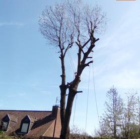 Élagage de vos arbres  :