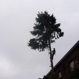 Élagage d'arbre :