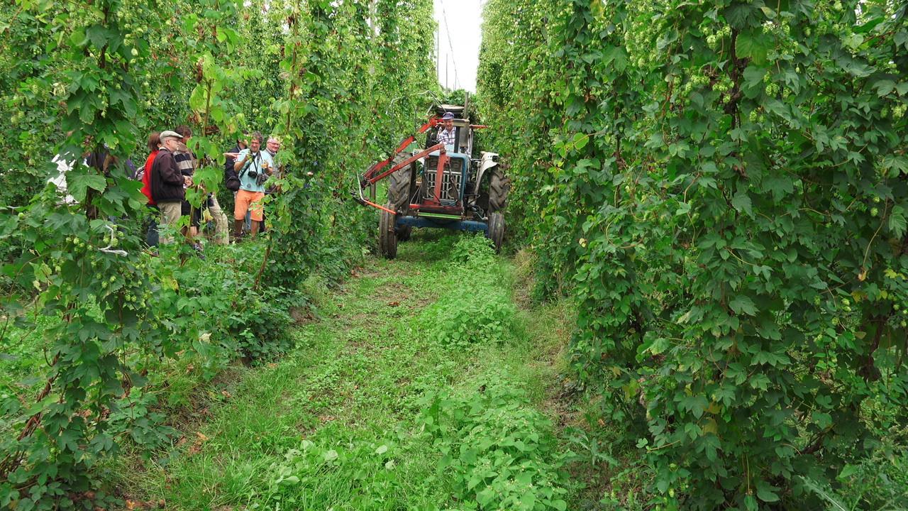 Fête du houblon et de la bière Hommelpap