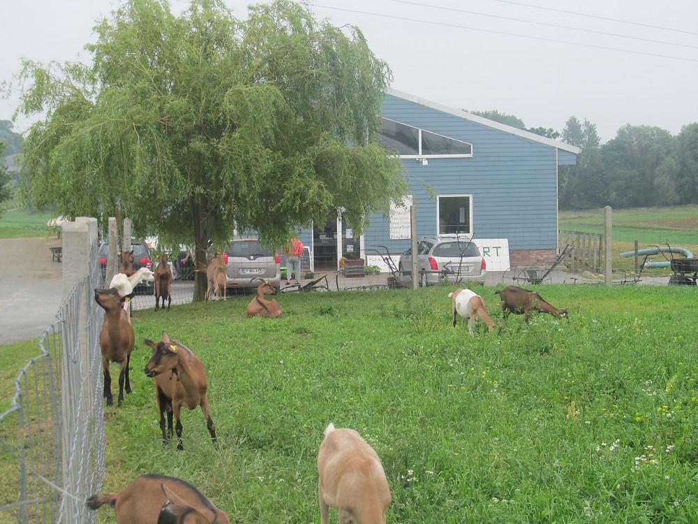 Vous êtes autonome pour découvrir gratuitement la chèvrerie, les lapins, l'âne, les poneys, les moutons...