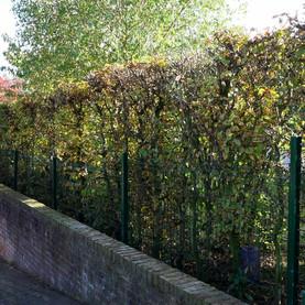 Un florilège de clôtures :