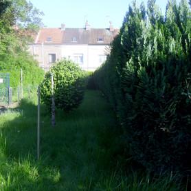 Élagage et jardin  :