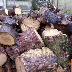 Tous les bois ne se valent pas en matière de chauffage :