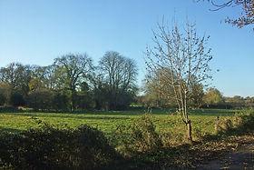 Fishpool Meadow Alongside Church Walk