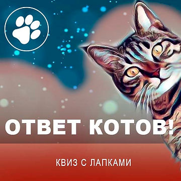 Ответ котов Квадрат 1.jpg